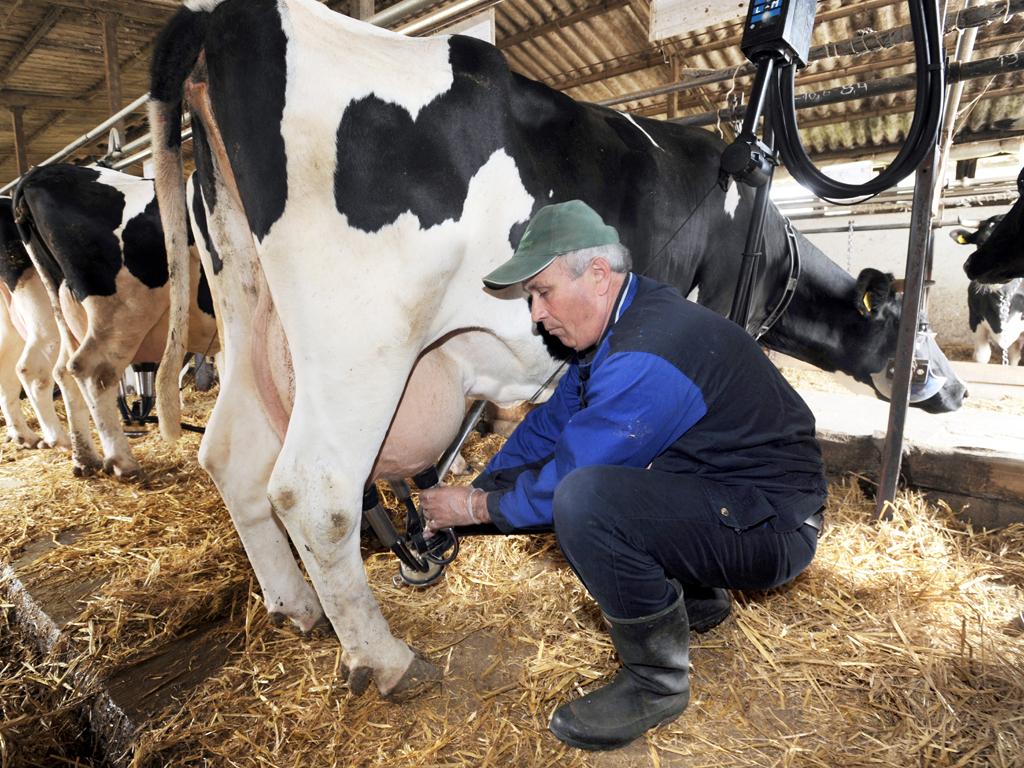 Phyto-Bomat biće 100% srpski prirodni proizvod - Etarska ulja u borbi protiv mastitisa kod krava