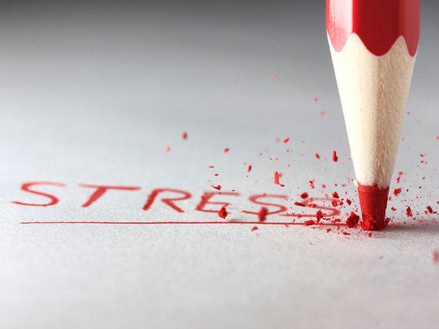 Sicht verbessert sich unter Stress - Was passiert mit dem Organismus, wenn das Gehirn eine Gefahr erkennt?