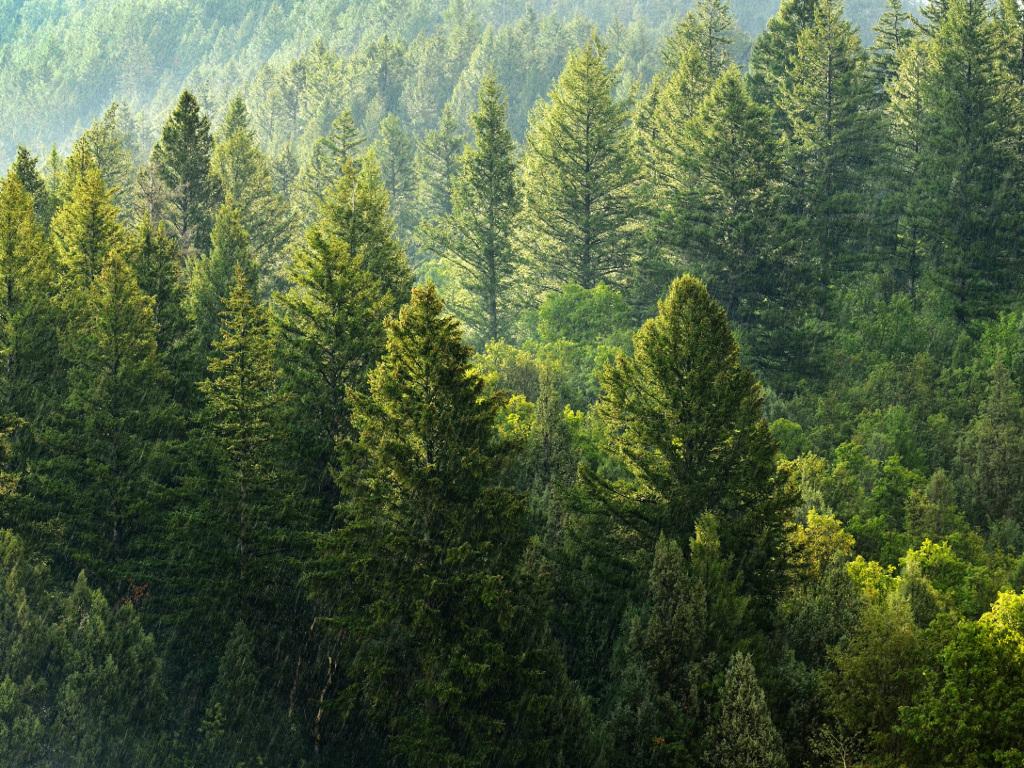 Efikasnije upravljanje šumama u valjevskom kraju koči administracija?