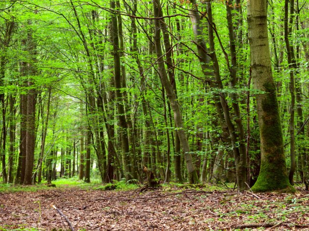 Izvještaj Koordinacionog tima za suzbijanje bespravnih aktivnosti u šumarstvu - Potrebna bolja saradnja Parka prirode Piva sa Upravom za šume