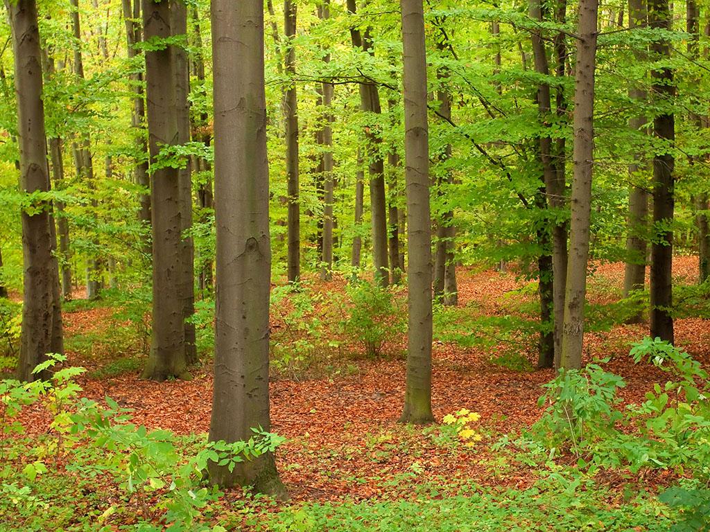 U svijetu izgubljeno 420 miliona hektara šume u poslednjih 30 godina