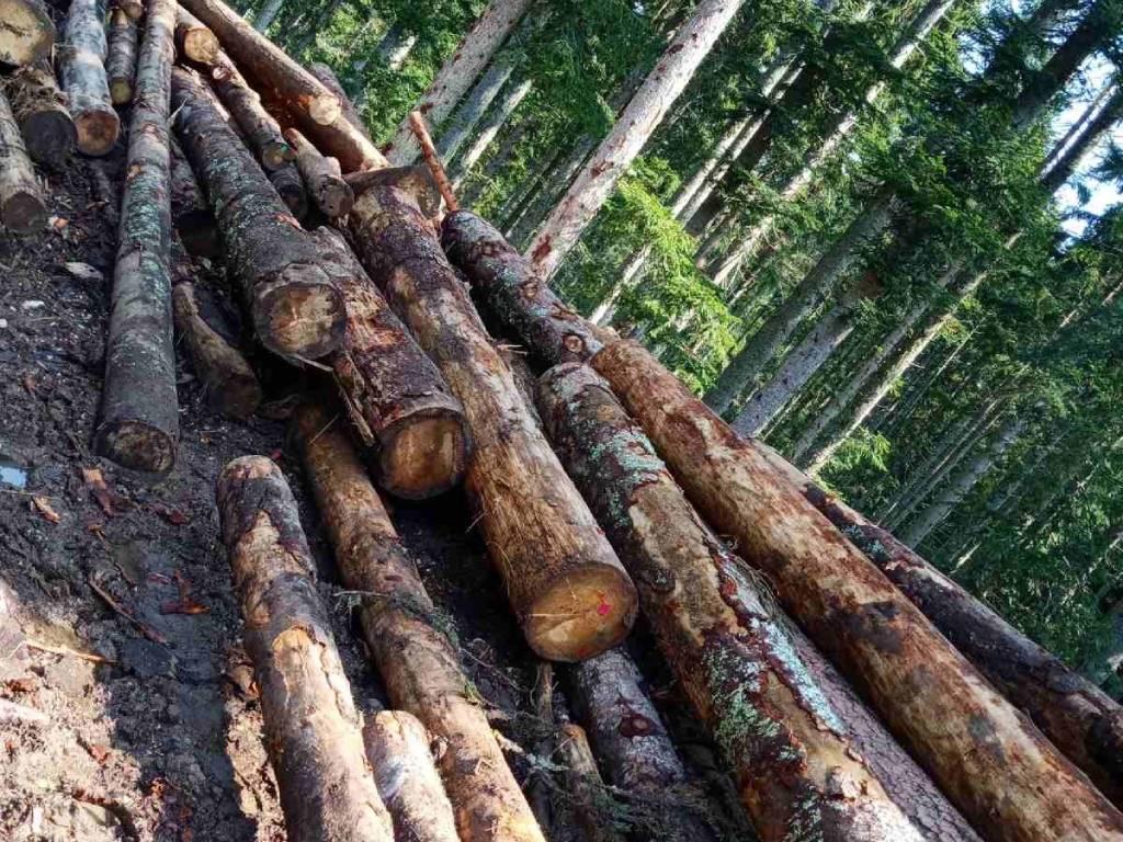 Budućnost drvne industrije Sokoca leži u boljoj iskorišćenosti šumskih potencijala - U planu razvoj turističke i lovno-turističke djelatnosti