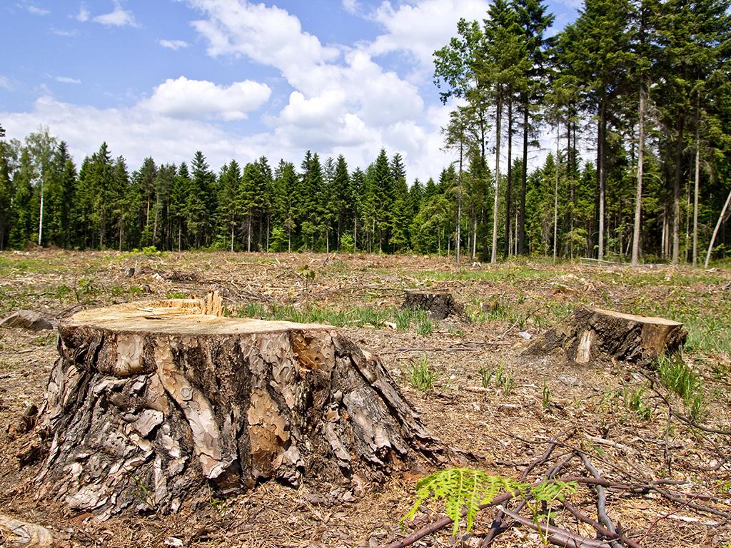 U kolašinskim šumama prošle godine bespravno posječeno 755,93 m3 drveta - Divlja sječa smanjena, ali i dalje predstavlja ozbiljan problem
