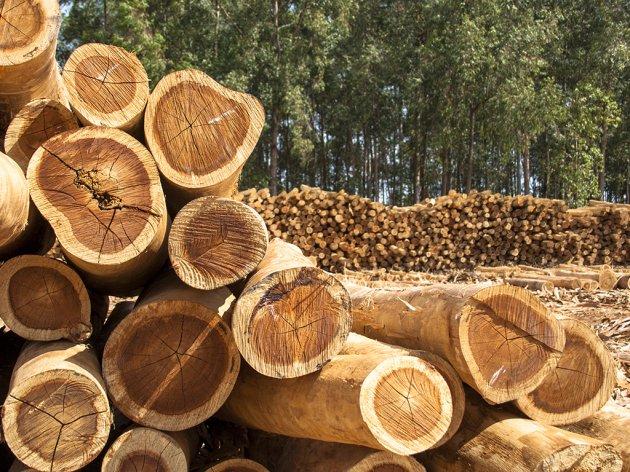 Uskoro zabrana i ograničenje izvoza šumske građe iz BiH