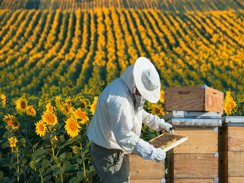 U Brčkom pokrenuta proizvodnja opreme za pčelare - Otvoren i edukativni centar