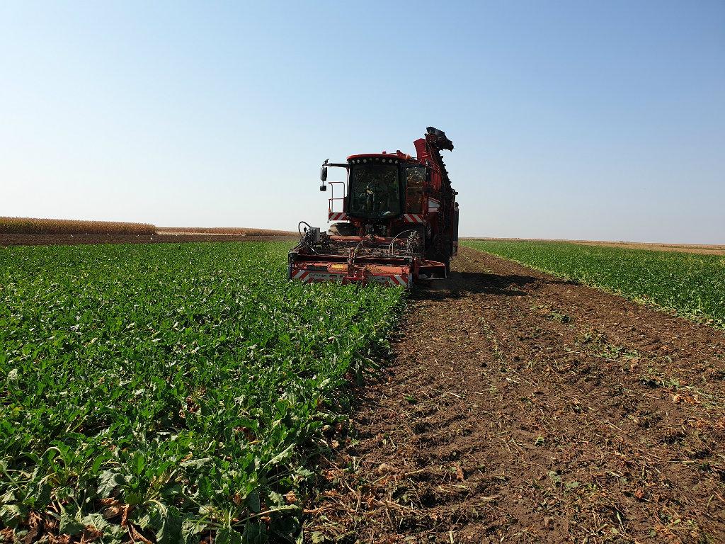 Počinje kampanja prerade šećerne repe - Iz kompanije Sunoko očekuju natprosečne rezultate