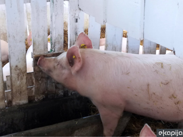 Raste cena svinjskog mesa u Francuskoj - Uzrok svinjska kuga u Kini