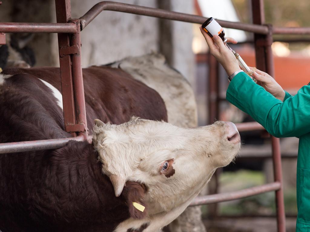 Institut Batut raspisao javnu nabavku za svežu goveđu krv