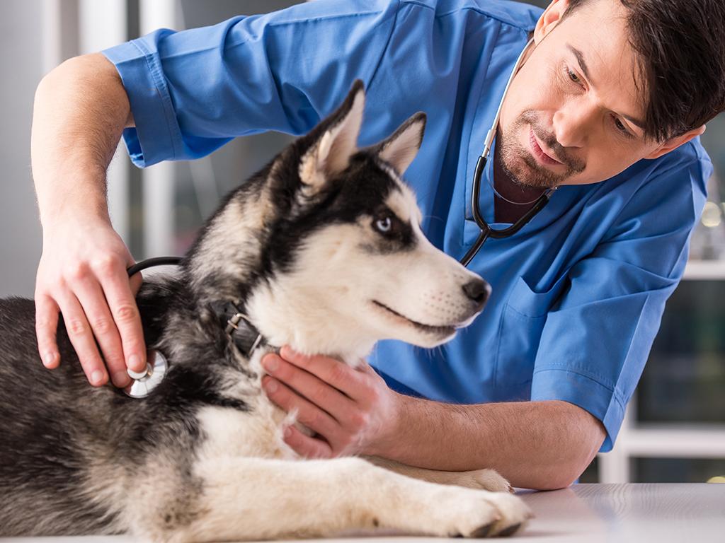 Srpski patent za lečenje bolesti retine i optičkog nerva kod pasa i mačaka - Dijagnostika za 30 sekundi