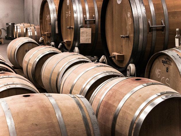 U Svilošu u planu izgradnja vinarije