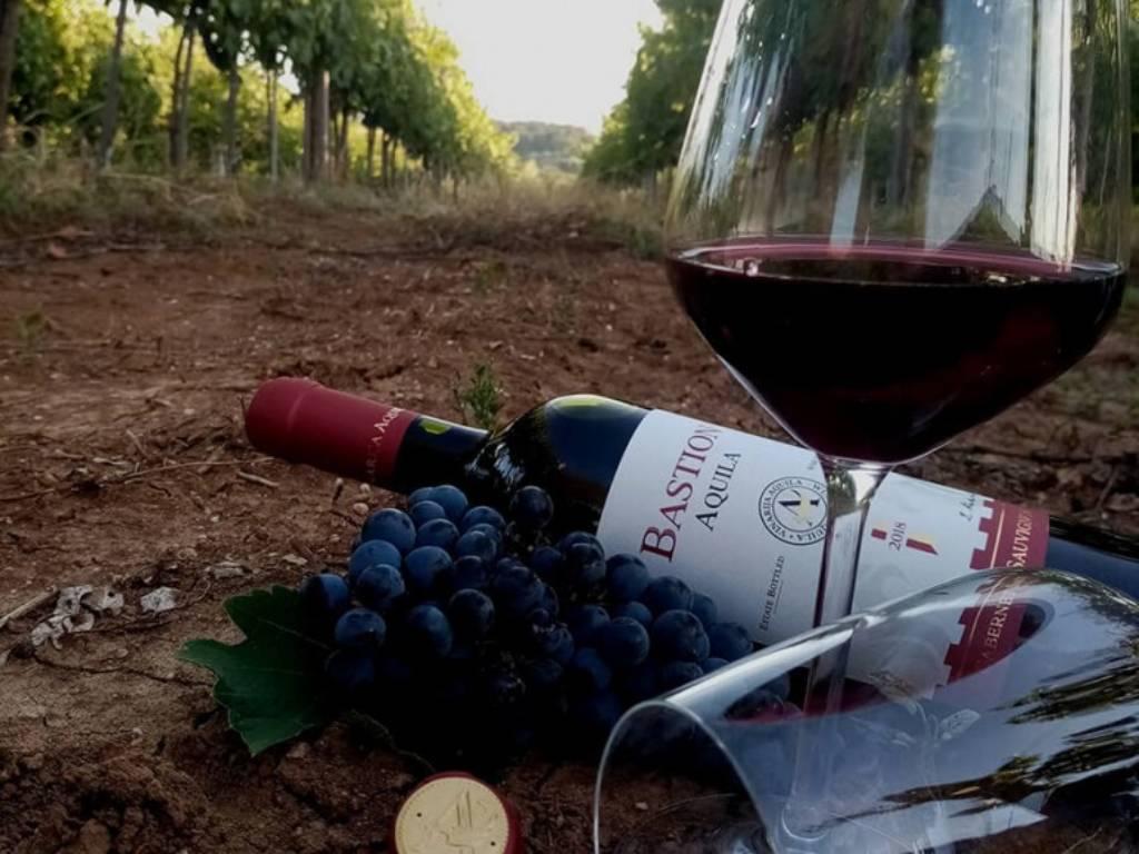 Francuske sorte sa Babičkog vinogorja - Vinarija Aquila planira proširenje zasada i proboj na šire tržište