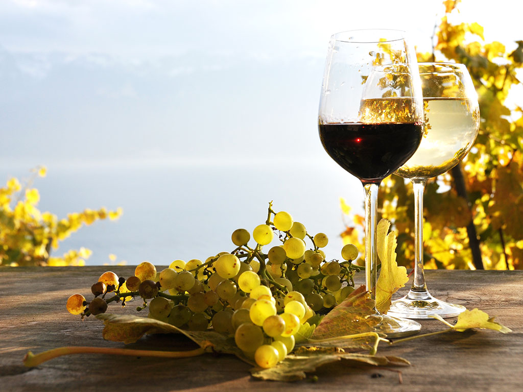 Winery known for Decanter silver medal-winning DiMASiD 2013 wine opens in Vranic