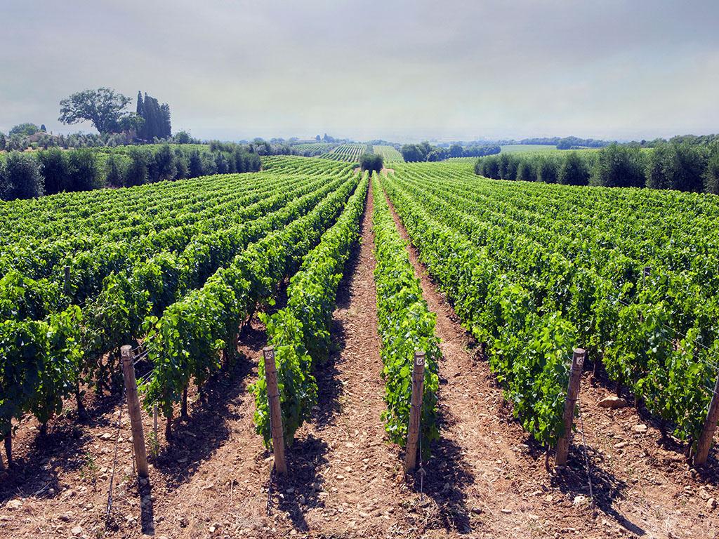 Uspješnu rukometnu karijeru zamijenio je poljoprivredom - Mladen Rakčević proizvodi vino i razvija ruralni turizam