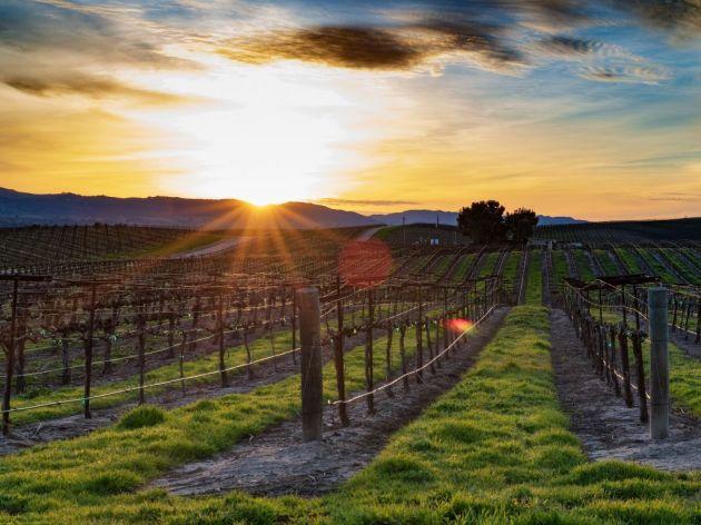 Poljoprivredna katastrofa - Francuska ostala bez polovine roda vinove loze?