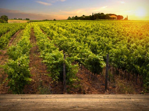 Petrovaradinska Toskana čeka investitore - Neselje Alibegovac je budući vinski, turistički i zdravstveni centar Novog Sada