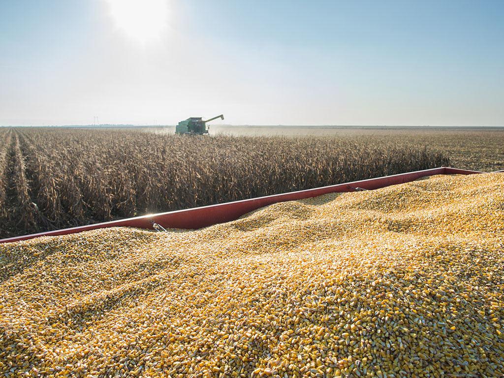 Šta bi moglo da podstakne rast cijena žitarica u ovoj godini?