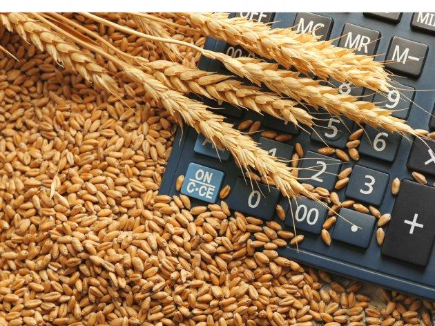 Prinosi pšenice od 10 tona mogući uz dobru agrotehniku i odabir prave sorte (VIDEO)
